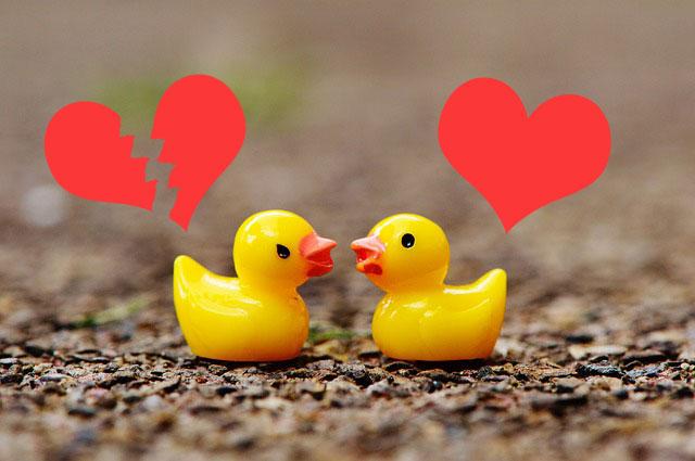 ducks-heart
