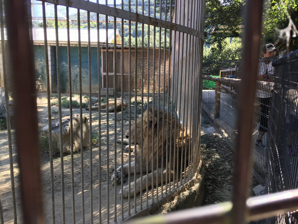shirotori-zoo_2594