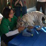 香川県しらとり動物園は動物とふれあえ過ぎる!トラの赤ちゃん撫でにいこう