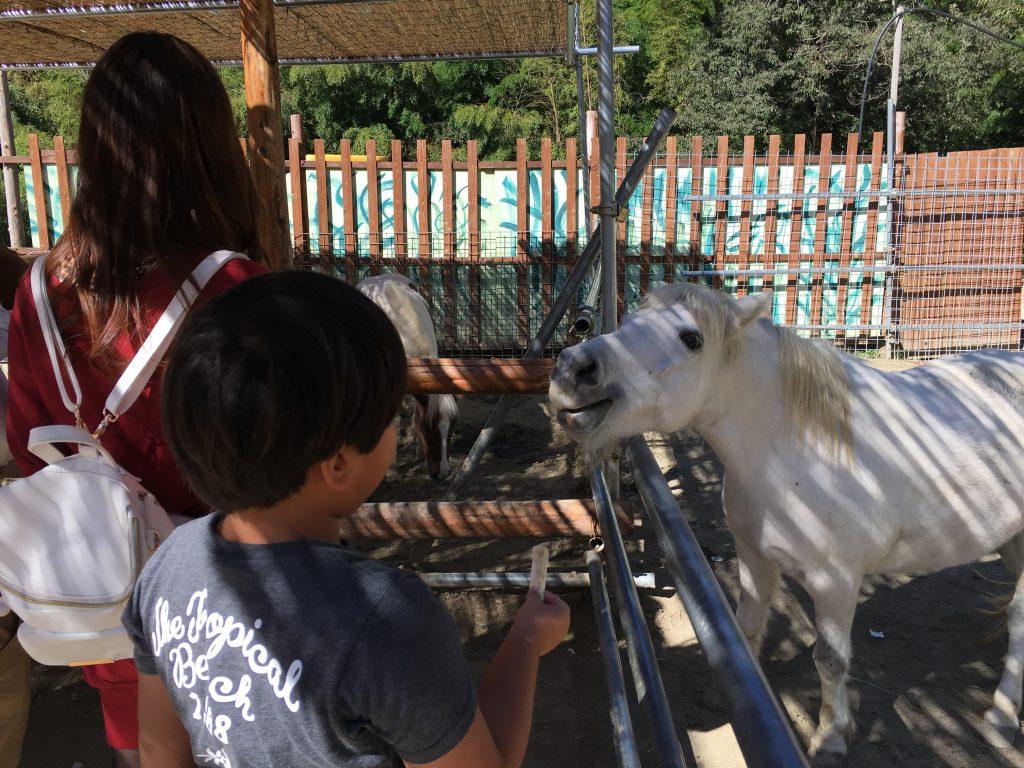 shirotori-zoo_2578
