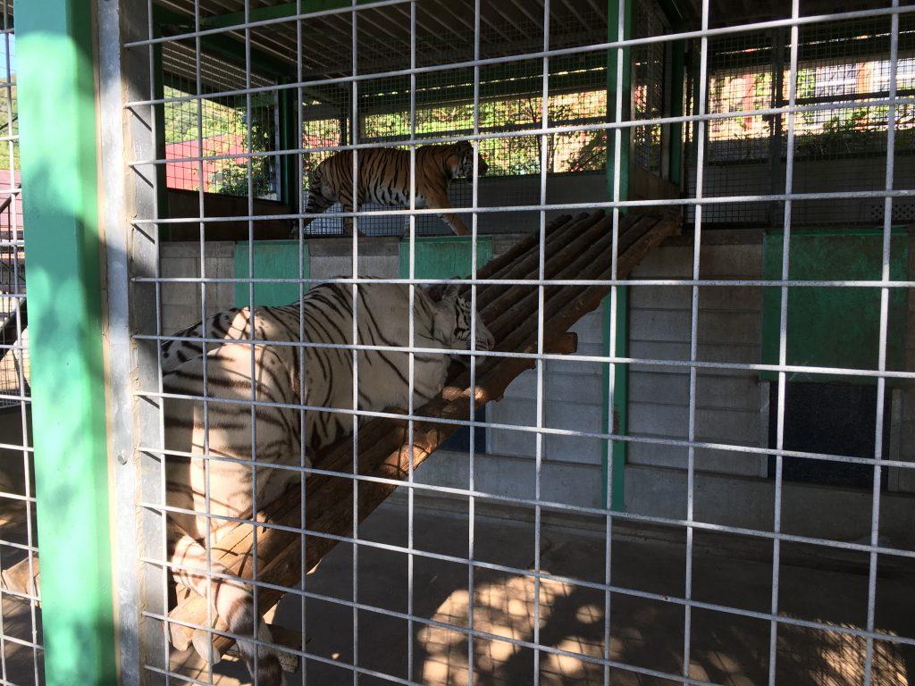 shirotori-zoo_2602